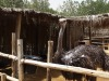Posh Paws Animals Sanctuary and Petting Farm